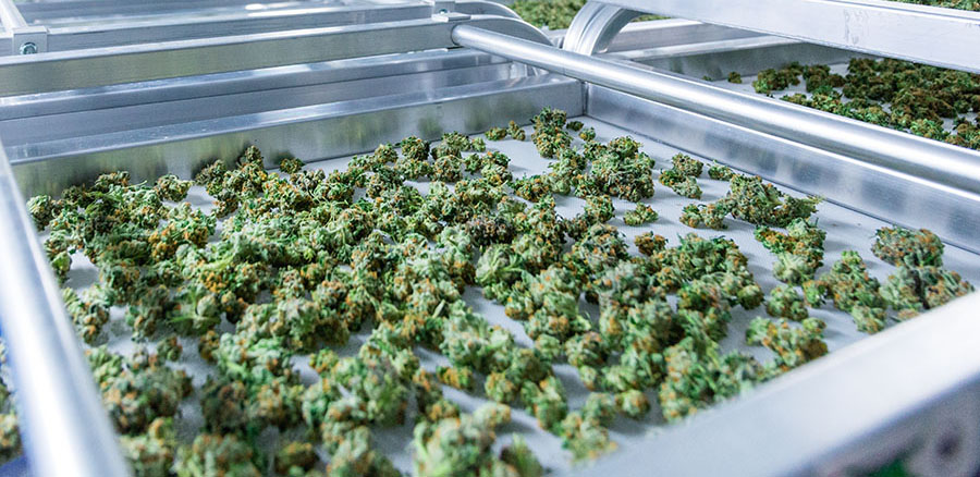 Cannabis Beverage and Edibles Supplier Signs Agreements with Manitoba and Saskatchewan