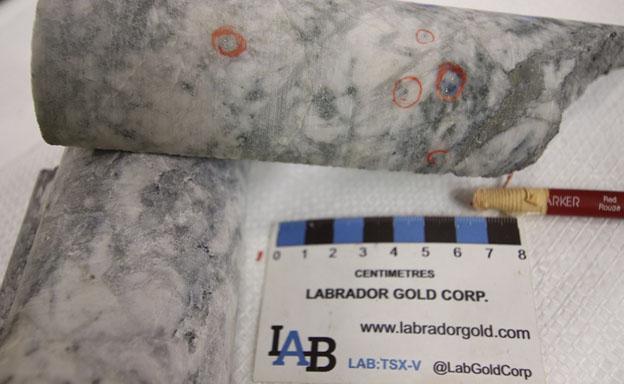 Labrador Gold
