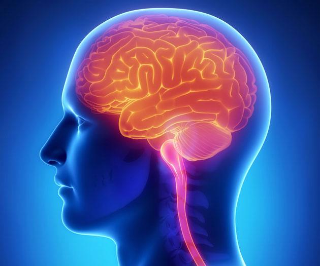 brain630