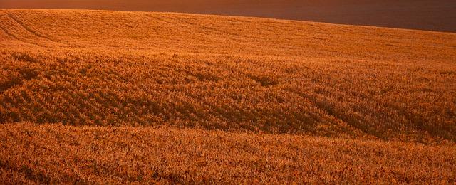 soybeanfield_11-23-20