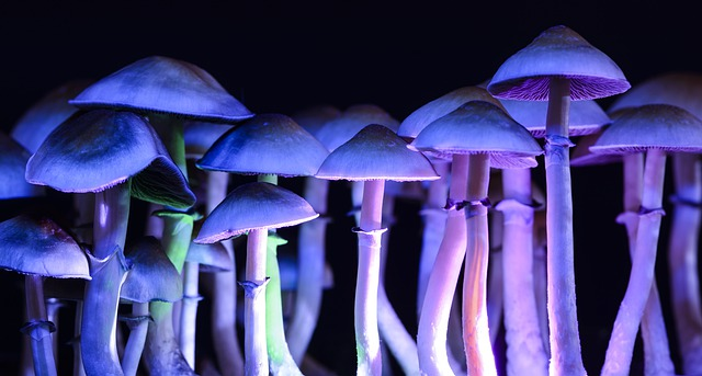 Life Sciences Company to Acquire Psychedelic Pharmaceutical Firm's Psilocybin Program