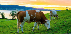 The Tiny Cleantech Company that Could Dethrone Beyond Meat