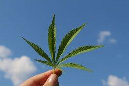 marijuana hemp stem