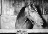 And Here Comes Whirlaway!: What Silver and the Horse Have in Common